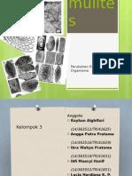 Presentasi Paleo Nummulites