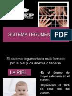 Morfología Sistema tegumentario