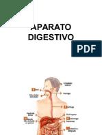 HISTOLOGIA DEL APARATO DIGESTIVO-Medicina humana