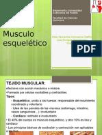 musculo estriado