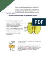 Germinación de Plantas Dicotiledóneas y Desarrollo Embrionario