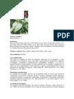 Vademecum Plantas Medicinales Colombianas[1] (2)