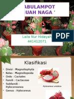 Tabulampot_buah Naga