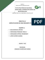 Práctica-4.-Amplificación-de-DNA-mediante-PCR-RAPD.docx