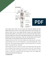 Anatomi Fisiologi Rangka Manusia