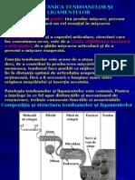Curs 14 Biomecanica AnII BFKT
