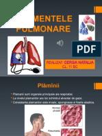 segmente pulmonare