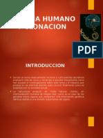 Presentacion Genoma Humano y Clonacion