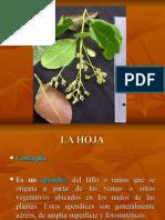 La Hoja