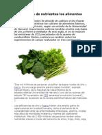 El CO2 vacía de nutrientes los alimentos básicos