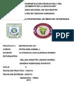 practica-2  NECROPSIA DE CUY.docx