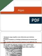 Algas