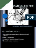 Anatomía Piso Pélvico