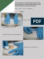 Estudio Comparativo de Dos Técnicas de Ovario Histerectomía en Gatas-fotos