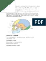 Fisiología y Anatomía