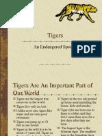 Tigers 1