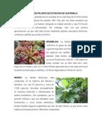 Plantas en Peligro de Extinción de Guatemala