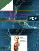 clasificacion sistema nervioso