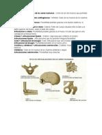 Artrosis y Tipos