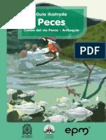 Guía Ilustrada Peces Cañón Del Río Porce - Antioquia