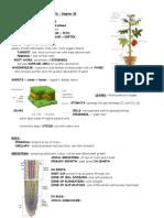 anatomy vascularplants 35 (1).doc