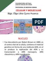 B-celular y Molecular Ix 2015 Nucleo