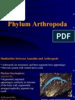 10 Arthropod