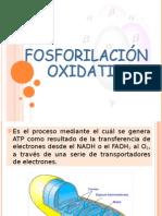 fosforilacion axidativa Quimica