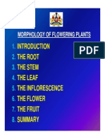 Morphology of Flowering Plants51_ppt