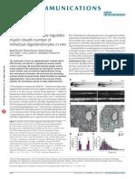 Synaptic Vesicle Release Regulates Myelin Sheath Number of Individual Oligodendrocytes in Vivo_2015