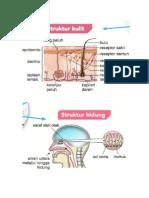 organ deria.doc