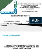 proiect diploma silvicultura