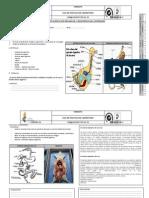 Observacion de Los Organos de La Digesation en Los Vertebrados