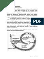 Morfologi Dan Anatomi Nematoda
