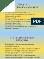 Tema10. Relacion en Animales (1)