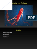 Prokaryotes and Archaea