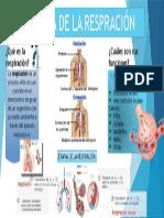 Fisiologia de La Respiracion