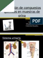 _Extracción(2)1.pptx