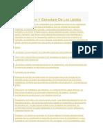 Definicion Y Estructura De Los Lipidos.docx