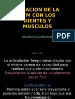 1 clase 2 semestre RELACION DE LA ATM CON LOS DIENTES Y.pptx
