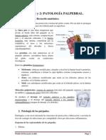 Patología Palpebral - Oftalmología