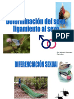 Determinacion Del Sexo 2015-i