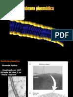 membrana_plasmática