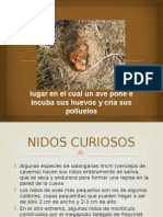 nidos-101010152500-phpapp02