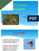 Biologa Elgorrion 140716163520 Phpapp01