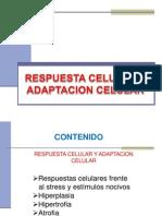 2.-Adaptacion Celular Uap