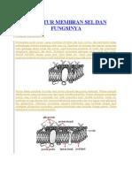 membran sel  Berdasarkan model mosaic cairan, membran sel terdiri dari lipid, protein, dan karbohidrat dalam perbandingan berbeda tergantung pada jenis sel. Membran sel tersusun atas lapisan lipoprotein yaitu gabungan antara lemak dan protein. Lipid penyusun membran sel terdiri dari pospolipid, spingolipid, glikolipid, dan sterol. Posfolipid merupakan gabungan antara lemak dan posfat, bersifat hidrofilik dengan ujung polar (larut dalam air). Sterol merupakan senyawa lemak penyusun membran sel yang bersifat hidrofobik dengan ujung tidak polar (tidak larut dalam air).