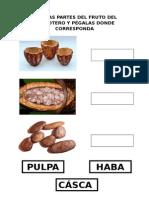 PARTES DEL FRUTO.doc