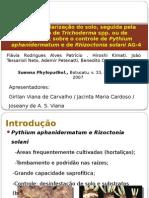 Efeitos da solarização do solo sobre Pythium aphanidermatum ae de Rhizoctonia solani AG-4