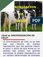 sincronizacion_y_poliovulacion.ppt